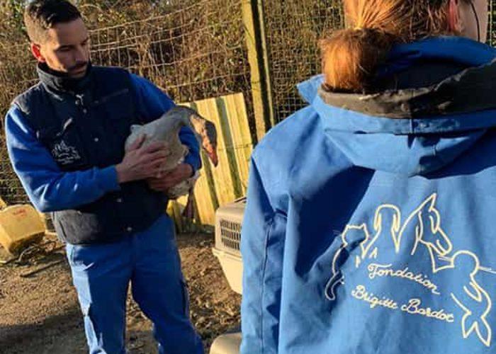 fondation brigitte bardot sauvetage aisne animaux de ferme chiens chat moutons chevres oie canards poules coqs