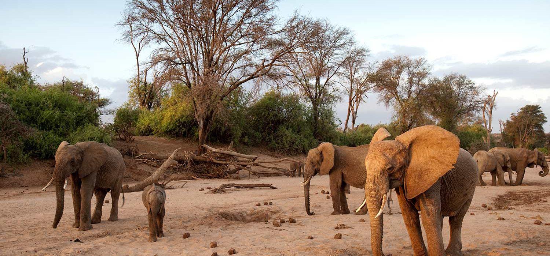 Fondation Brigitte Bardot CITES especes sauvages menacées