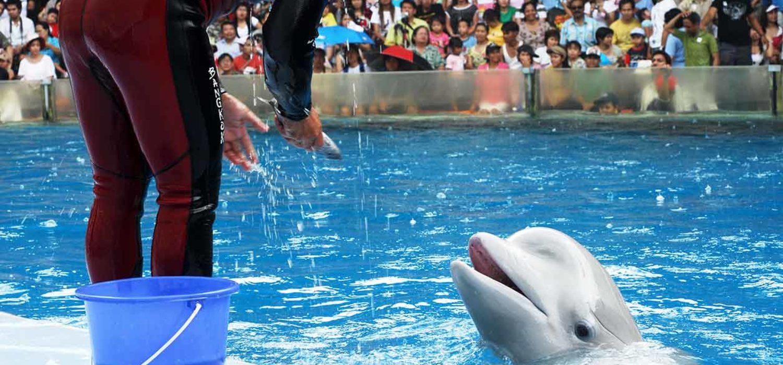 Fondation Brigitte Bardot combat contre les cirques, les delphinariums, la corrida et la captivité des animaux