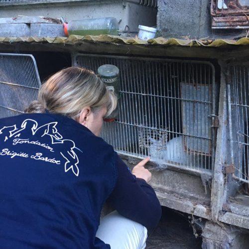fbb sauvetage animaux de ferme essonne