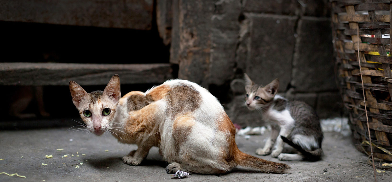 fondation bardot sterilisation chiens chats errants